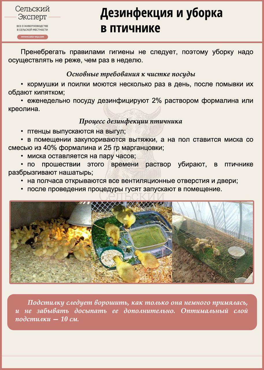 Дезинфекция и уборка в птичнике