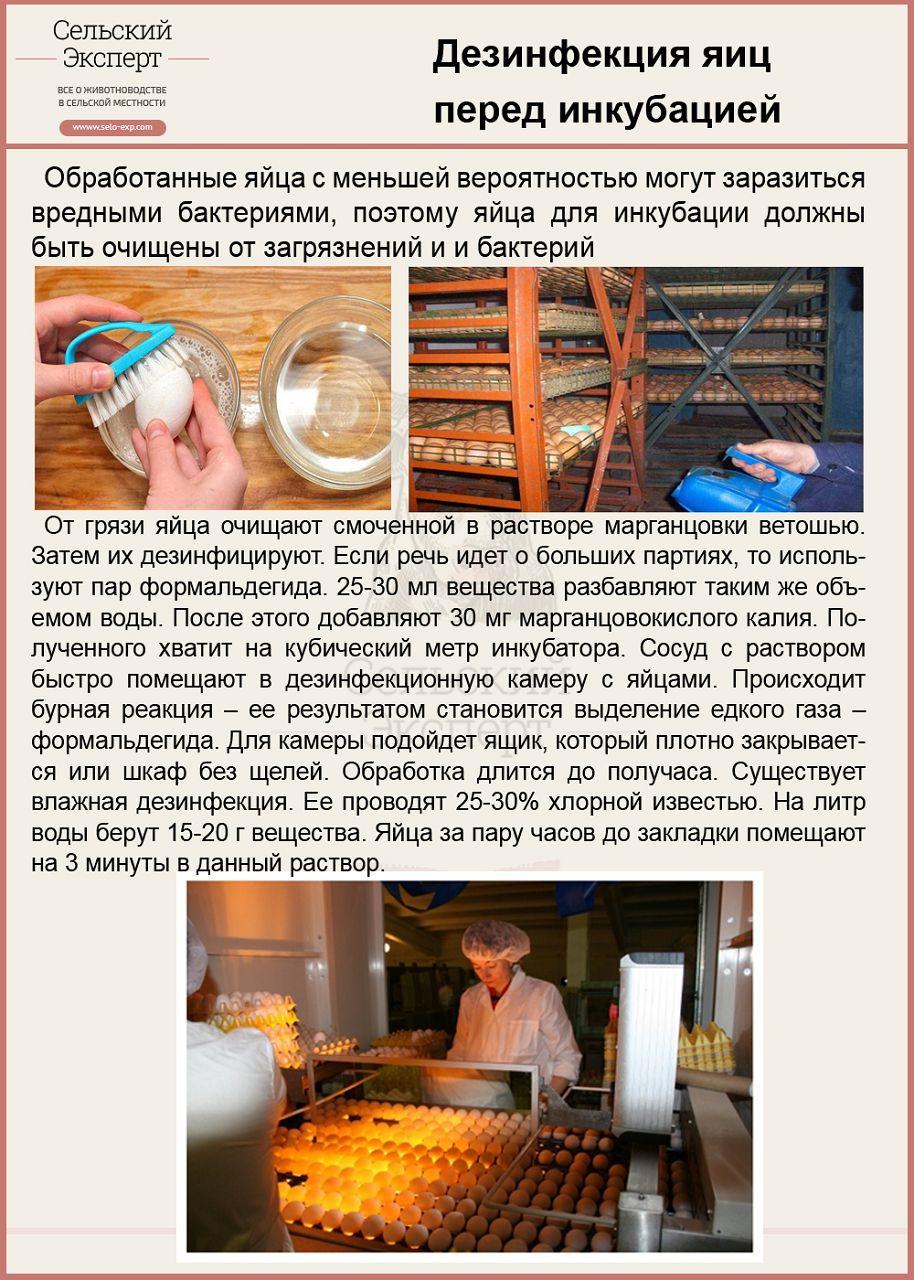 Дезинфекция яиц перед закладкой