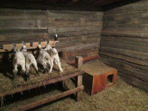 Домик для козлят