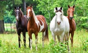 Животные с полноценным питанием дают крепкое потомство и хорошо набирают вес
