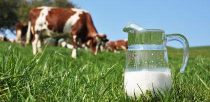 Коровье молоко можно использовать, когда нет других вариантов