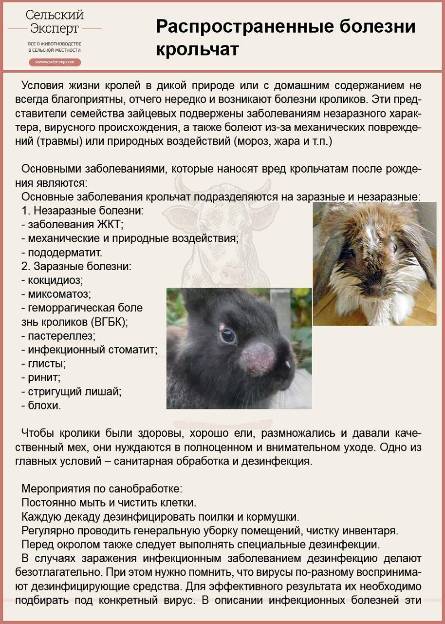 Заболевания крольчат