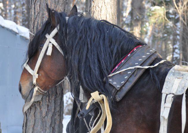 Как запрячь коня