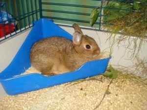 Кал кролика