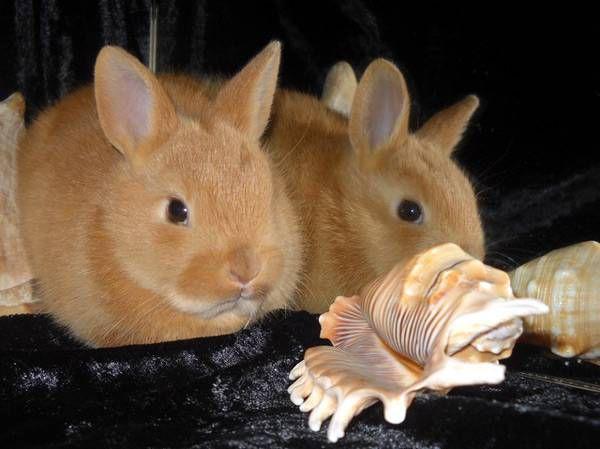Кролики становятся очень сообразительными и послушными домашними питомцами