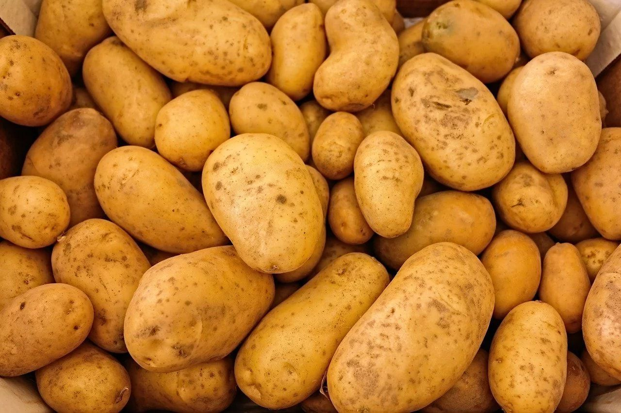 Картофель негативно влияет на лактацию козы