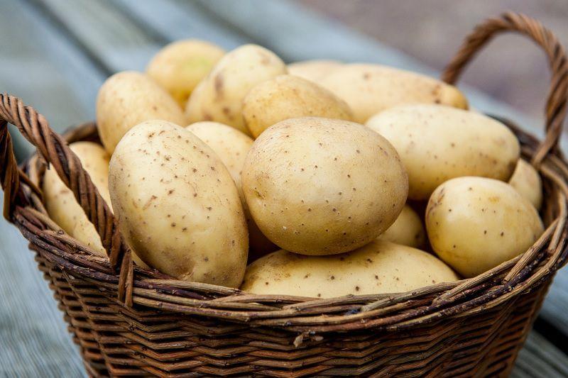 При наличии в рационе картофеля, жом составляет не более 20% от всего объёма
