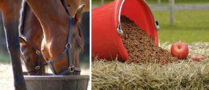 Кормление лошадей, основанное на премиксах с повышенным содержанием полезных веществ