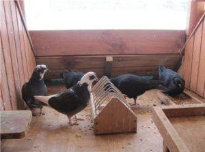 Кормушка для голубей