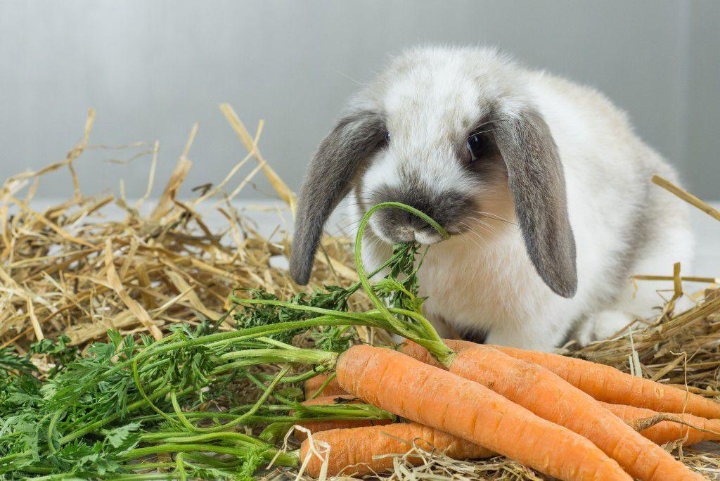 Корм, который полезен беременной крольчихе
