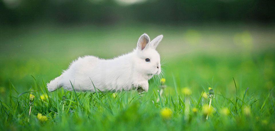 Кроликам необходимы прогулки
