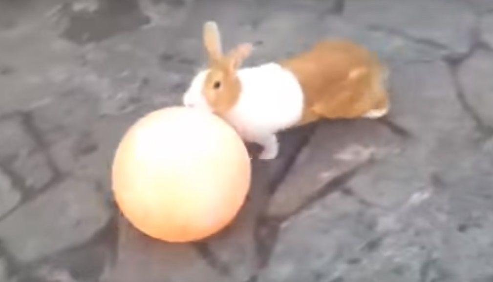 Кролик катает мяч
