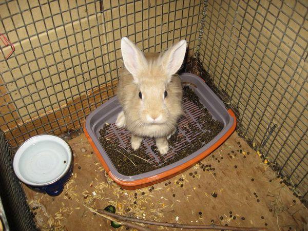 Кроличий горох в клетке