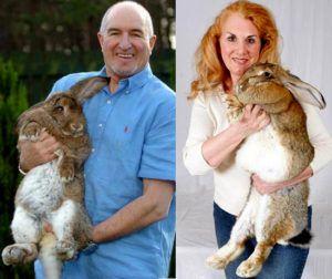 Крупные дрессированные домашние кролики со своими хозяевами