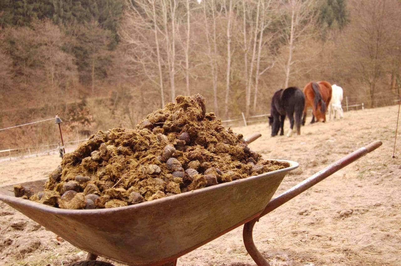Лошади - источник высококачественного удобрения