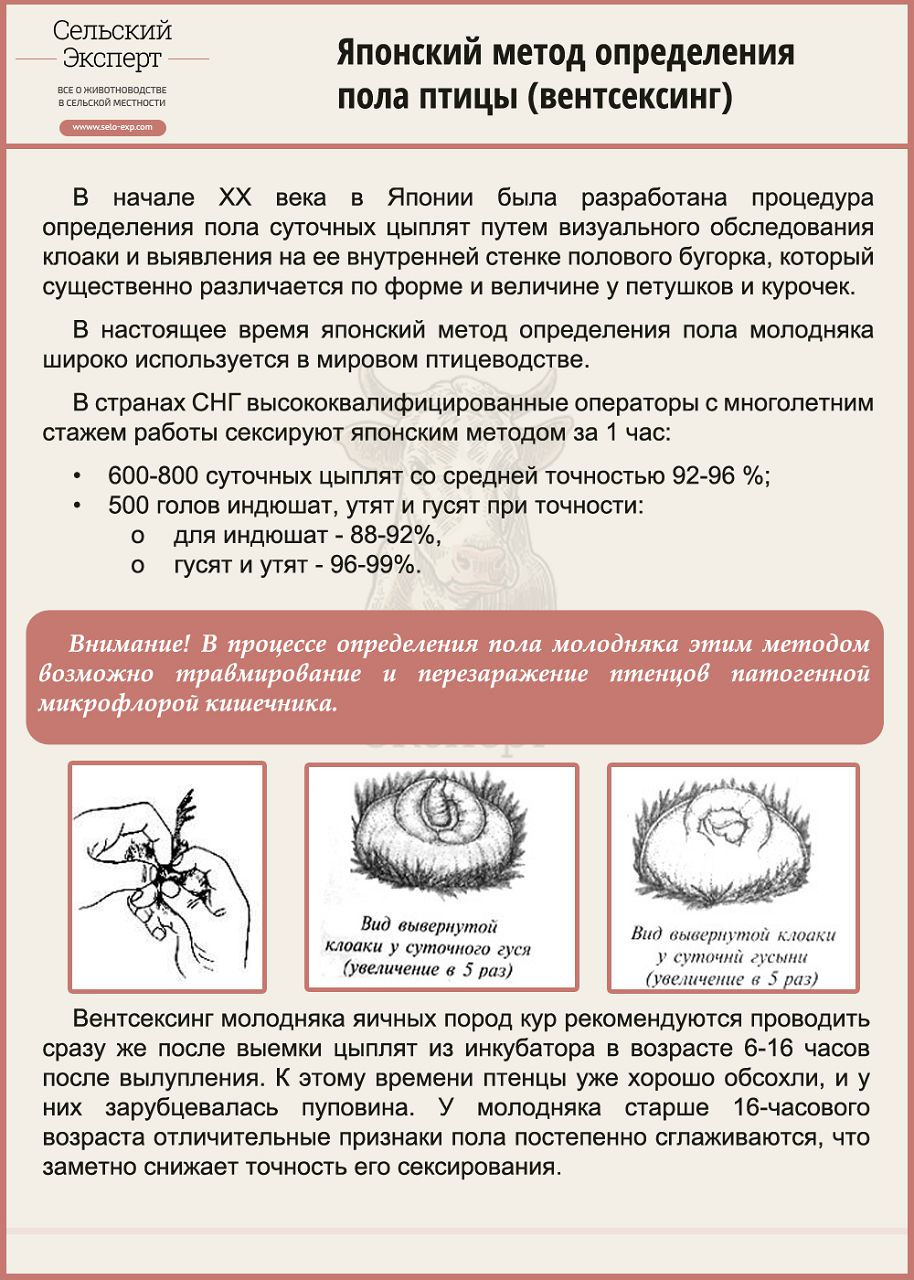 Метод вентсексинга при определении пола птицы
