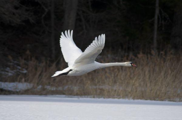 Многие птицы остаются зимовать дома