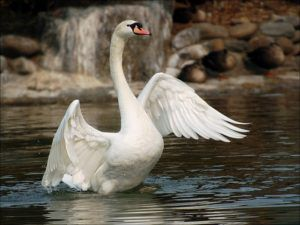 Птицам также требуются витамины и минералы