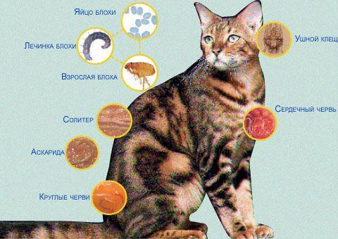 Паразиты могут передаваться кроликам от кошек