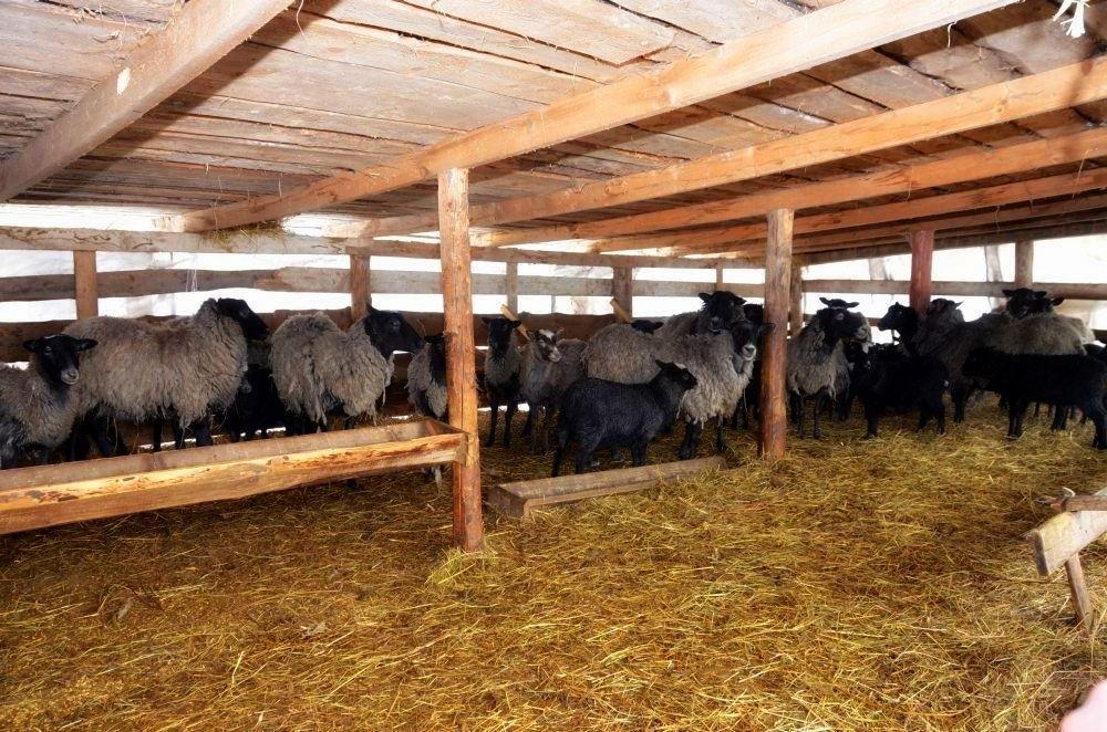 Овцы в загоне с навесом