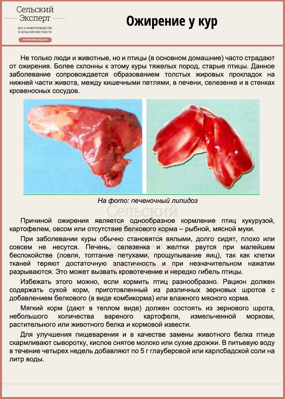 Ожирение у кур