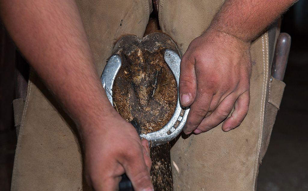 Опилки вычищаются специальным крючком для ухода за копытами