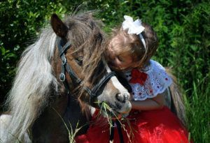 Знакомство с лошадью