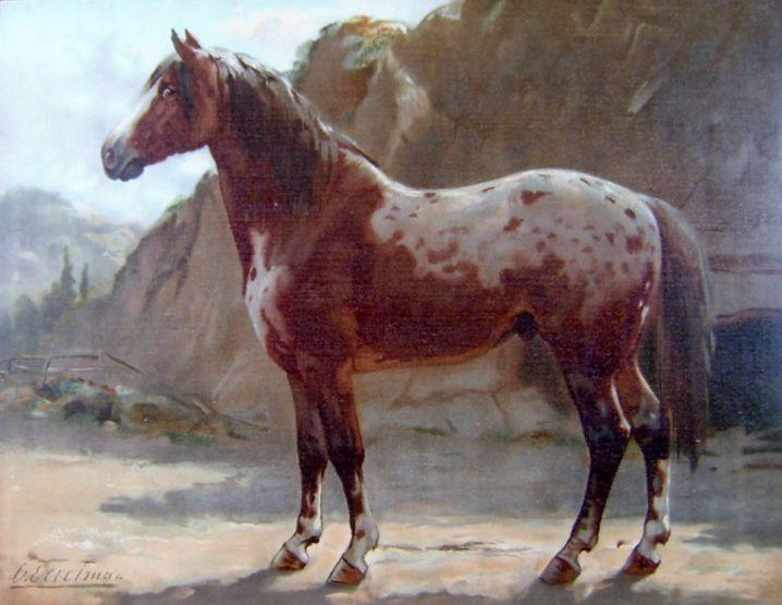 Пинцгауэрская лошадь