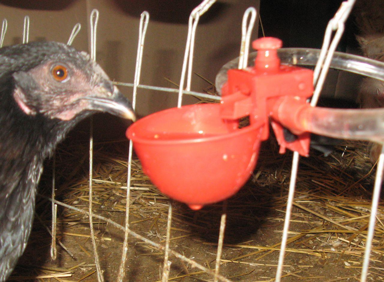 Пример удобной поилки для домашней птицы