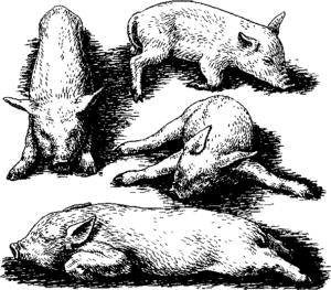 При воспалении легких животное часто принимает позы, изображенные на картинке