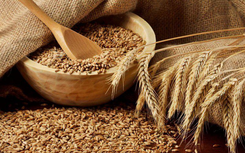 Пшеница дается лишь в малых дозах, в крупных объемах она провоцирует вздутие живота