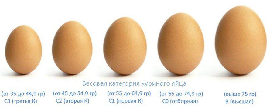 Размер яиц зависит и от возраста курицы