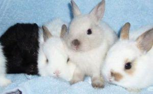 Здоровые крольчата