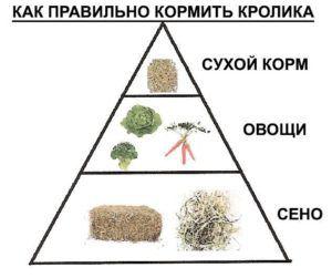 Пирамида питания месячного кролика