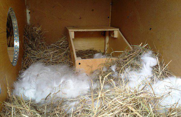 Ящик для крольчат с затемнением
