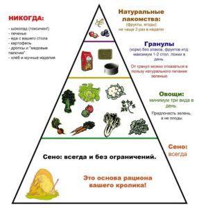 Пирамида рациона для кроликов