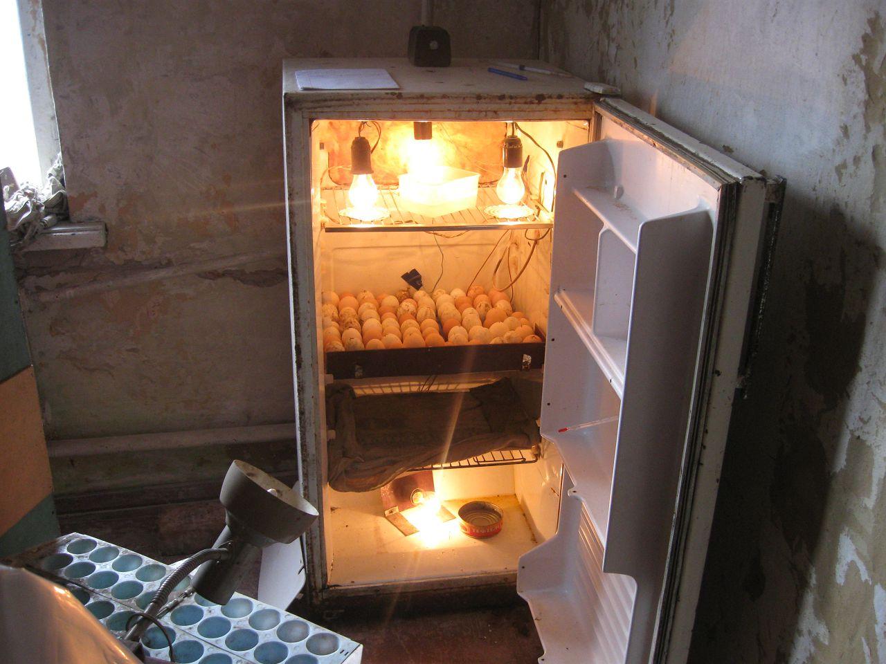Инкубатор из холодильной камеры