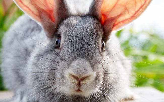 Родившая крольчиха