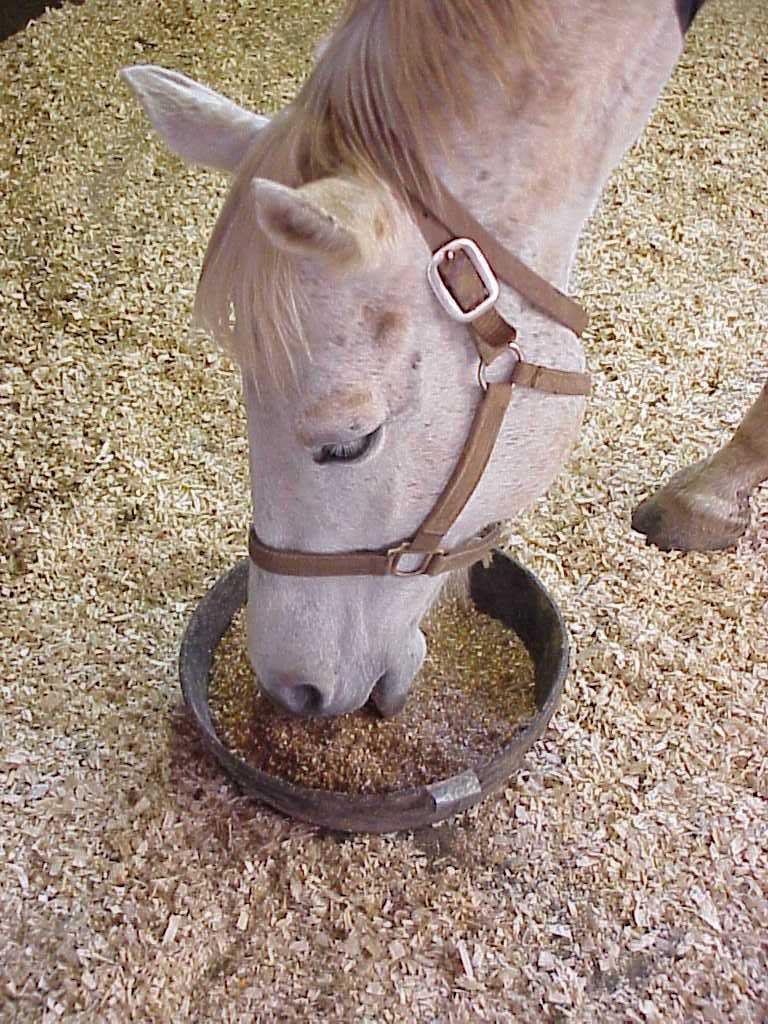 Свекловичный жом в рационе лошадей снижает кислотность желудка