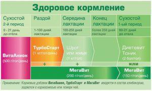Схема кормления на натуральном концентрате в период сухостоя