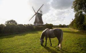 Фермеры все чаще вспоминают о лошадях как об удобном виде транспорта