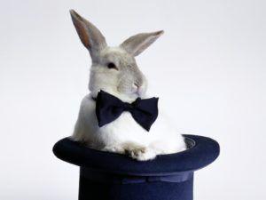 Как дрессировать кролика