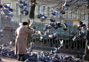 Кормление голубей в городе