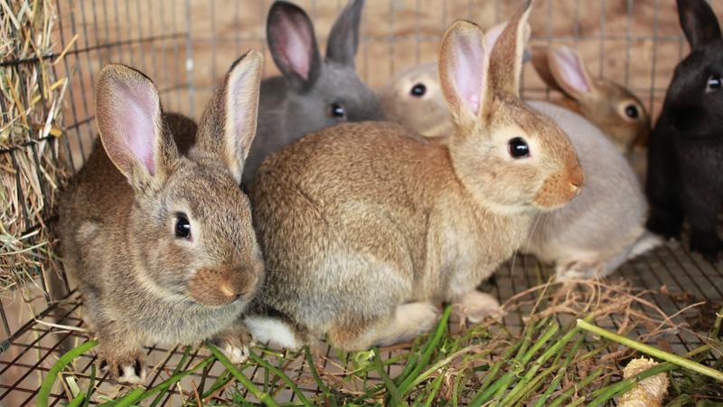 Кролики на домашней ферме