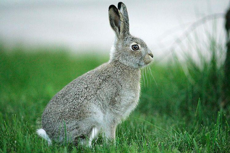 Кролики - производители ценного удобрения