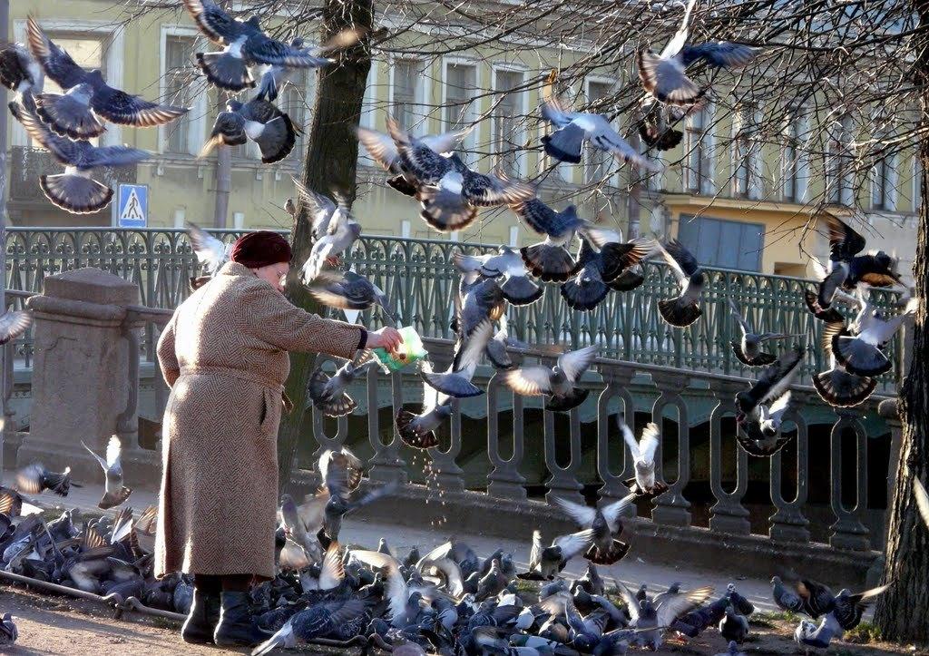 странно, актер приснилось что знакомый фотографирует голубей следующем примере