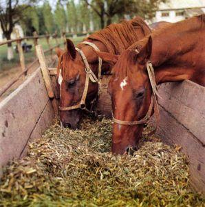 Качественный силос для беременной лошади