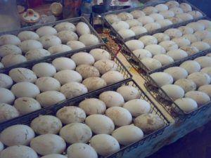 Гусиные яйца в инкубаторе