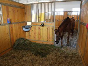 Подготовка помещения для родов лошади