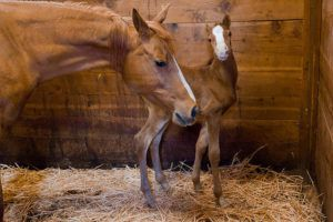 Кобыла и ее новорожденный детеныш